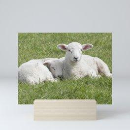 Spring little lambs Mini Art Print