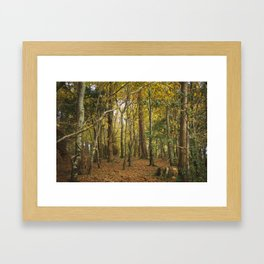 Fairy Woods Framed Art Print
