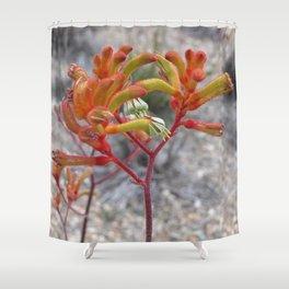 Orange Kangaroo Paw Flowers Shower Curtain