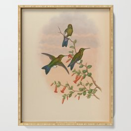 Vintage Print - A Monograph of the Hummingbirds (1849) - Coppery-naped Puffleg Serving Tray