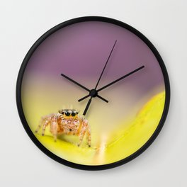 Jumping spider  Wall Clock