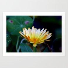orange & white flower Art Print