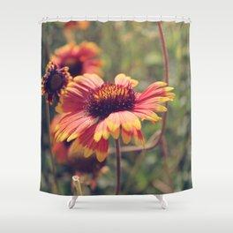 Gaillardia flower Shower Curtain