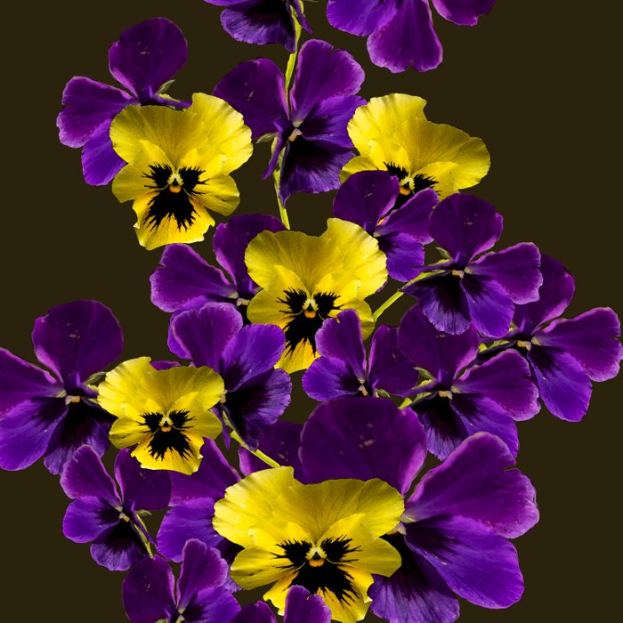 Purple and yellow flowers on a dark background decor buyart purple and yellow flowers on a dark background decor buyart society6 comforters mightylinksfo