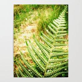 Green Fern Poster