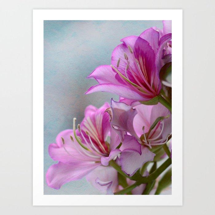 Pink delight 1 Art Print