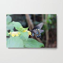 Tiger Swallowtail Butterfly on Flower Metal Print