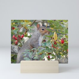 Grey Squirrel Mini Art Print