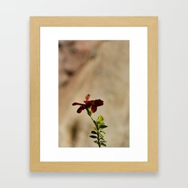 The Red Flower Framed Art Print