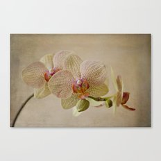 Yellow Spotted Orchid Canvas Print