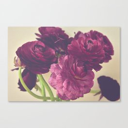 Romantic Ranunculus Canvas Print
