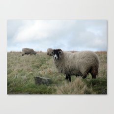 Yorkshire Dalesbred Sheep Canvas Print