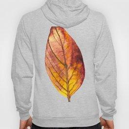Autumn Leaf 03 Hoody