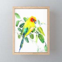 Sun Parakeet Framed Mini Art Print