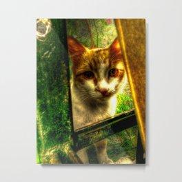 Daisy Cat Metal Print