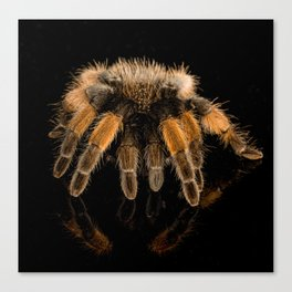 Tarantula and Reflection Canvas Print