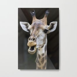 Giraffe portrait, black background Metal Print
