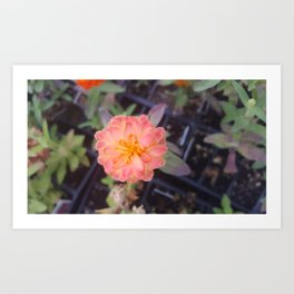Small flower Art Print
