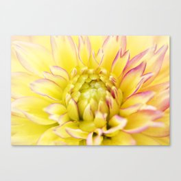 XXL Sunset Dahlia Canvas Print