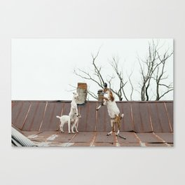 Goats Sparring on the Roof Canvas Print