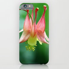 Wild Columbine Slim Case iPhone 6s