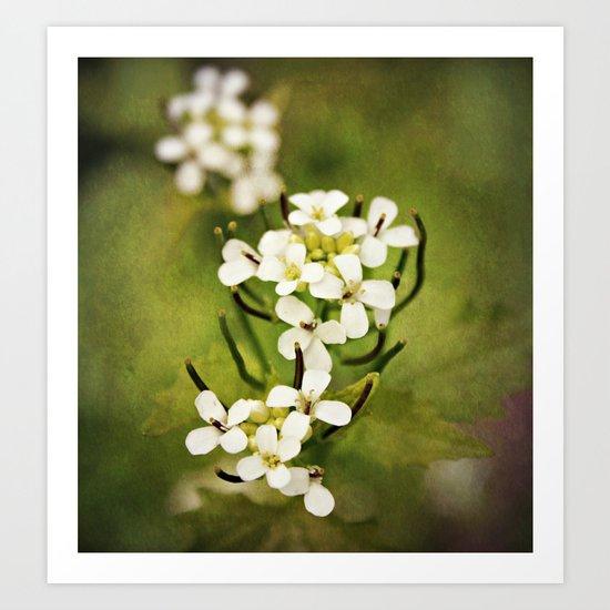 Petals of White Art Print