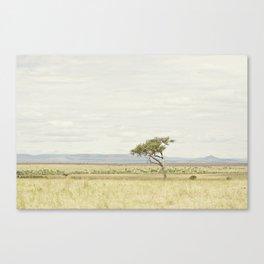 tree of life::kenya Canvas Print