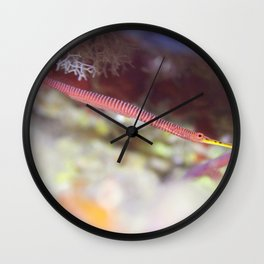 Banded pipefish with eggs Wall Clock