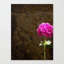 Lonely Verbena Canvas Print