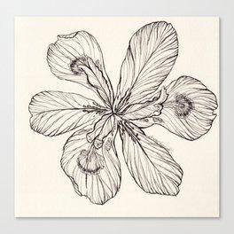Floral Ink Illustration Canvas Print