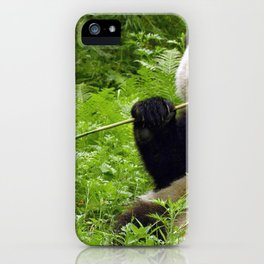 Exotic Super Dainty Grown Panda Bear Chewing On Bamboo Twig In Jungle Close Up Ultra High Res iPhone Case
