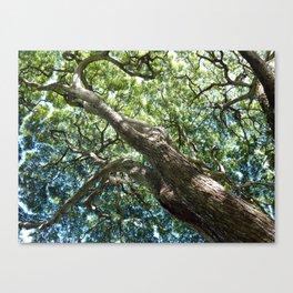 waimea tree Canvas Print