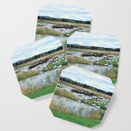 1001 Snow Geese Coaster