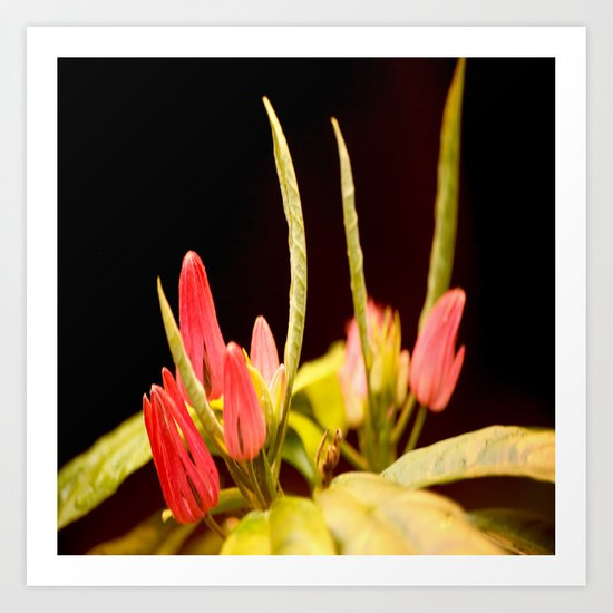 Exotic Colorful Flowers Art Print