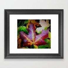 Autumn Leaves - Colored Glass Framed Art Print