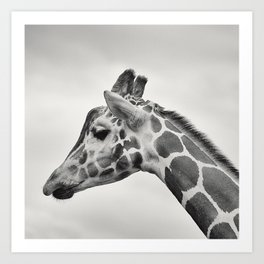 giraffe black white Art Print
