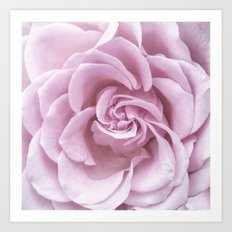 Pink Heart of a rose Art Print