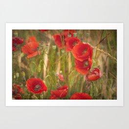 Poppies...... Art Print