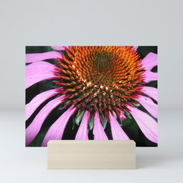 Echinacea Purple Coneflower Mini Art Print