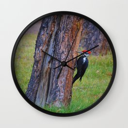 Pileated woodpecker hard at work in Jasper National Park Wall Clock