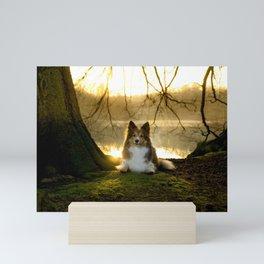 Shetland Sheepdog (Sheltie) Mini Art Print