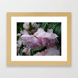Flower pic 6 Framed Art Print