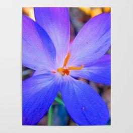 Springtime Flowers Poster