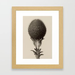 Karl Blossfeldt - Thorned Bulbous Plant Framed Art Print