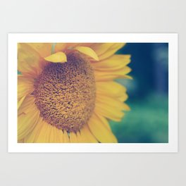 sunflower day Art Print