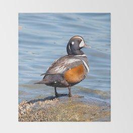 Beautiful Harlequin Duck on the Rocks Throw Blanket