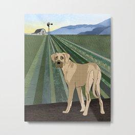 Farm Dog Metal Print