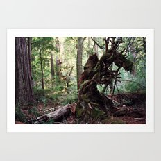 forest decomposition Art Print