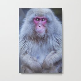 Japanese snow monkey sitting at hot spring in Jigokudani Park Metal Print