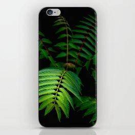 Illuminated Fern Leaf In A Dark Forest Background iPhone Skin